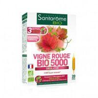 Santarome Bio Vigne Rouge Solution Buvable 20 Ampoules/10ml à SOUMOULOU